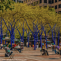 Buy canvas prints of Seattle Park with Blue Trees    by Darryl Brooks