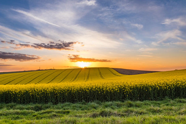 South Downs Sunset Canvas print by Nigel Smith