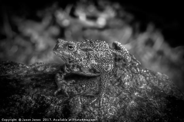 Amphibian, Common British Toad / Frog Canvas print by Jason Jones