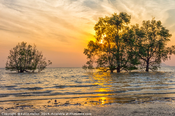 Sunrise over mangrove trees Canvas Print by Kevin Hellon
