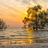 Buy canvas prints of Sunrise over mangrove trees by Kevin Hellon