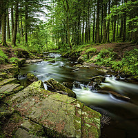 Buy canvas prints of Nature Surrounds by David MM Williams
