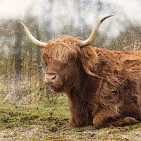 Buy canvas prints of galloway in the wild by Compu infoto