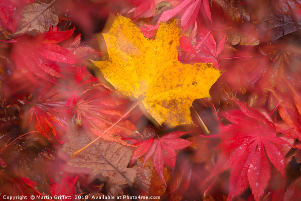 Autumn Colours Canvas print by Martin Griffett