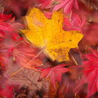 Buy canvas prints of Autumn Colours by Martin Griffett