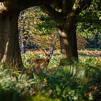 Buy canvas prints of Richmond Park by Martin Griffett