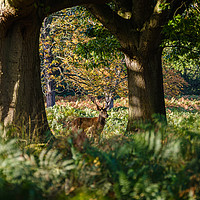 Buy canvas prints of Richmond Park (16x9 crop) by Martin Griffett