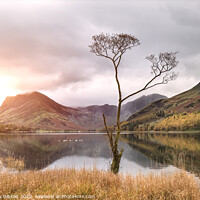 Buy canvas prints of Beautiful Autumn Fall landscape image of Lake Buttermere in Lake District England  by Matthew Gibson