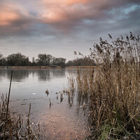 Buy canvas prints of Stunning colorful Winter sunrise over reeds on lake in Cotswolds in England by Matthew Gibson