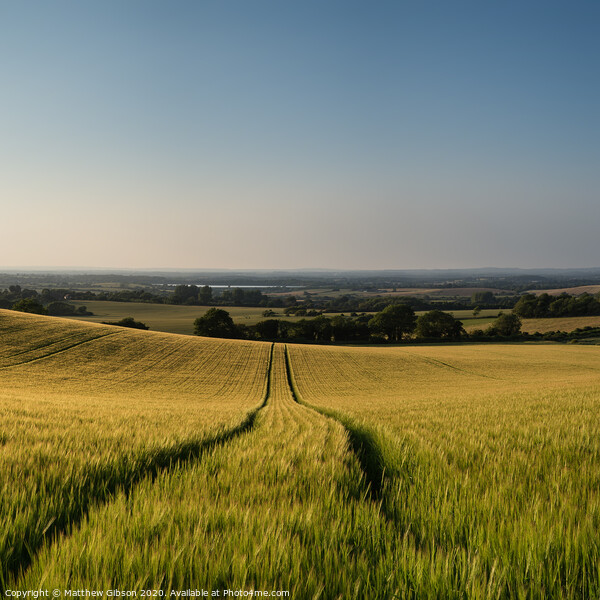 Stunning countryside landscape wheat field in Summer sunset Print by Matthew Gibson
