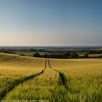 Buy canvas prints of Stunning countryside landscape wheat field in Summer sunset by Matthew Gibson
