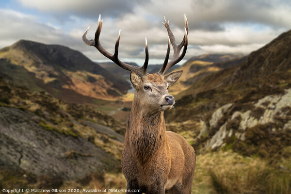 Majestic Autumn Fall landscape of red deer stag in front of mountain landscape in background Acrylic by Matthew Gibson