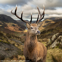 Buy canvas prints of Majestic Autumn Fall landscape of red deer stag in front of mountain landscape in background by Matthew Gibson