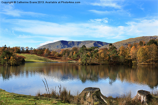 Tarn Hows Canvas print by Catherine Evans