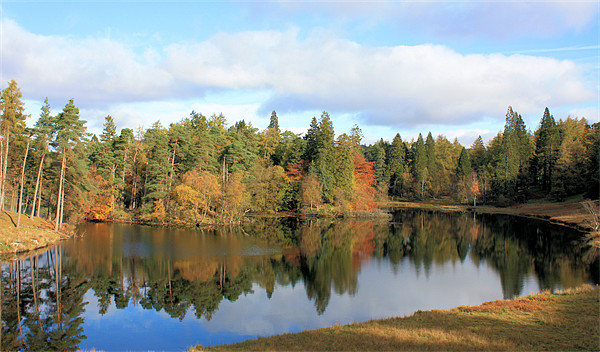 Tarn Hows #2 Canvas print by Catherine Evans