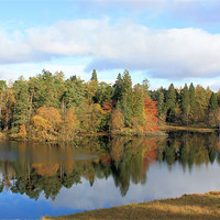 Buy canvas prints of Tarn Hows #2 by Catherine Evans