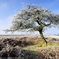 Buy canvas prints of Frost covered tree on a winter morning. by Philip Veale