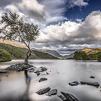 Buy canvas prints of The Lone Tree - Llyn Padarn by Karl McCarthy