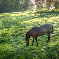Buy canvas prints of Dappled Sunlight and a Horse Grazing by Jim Key