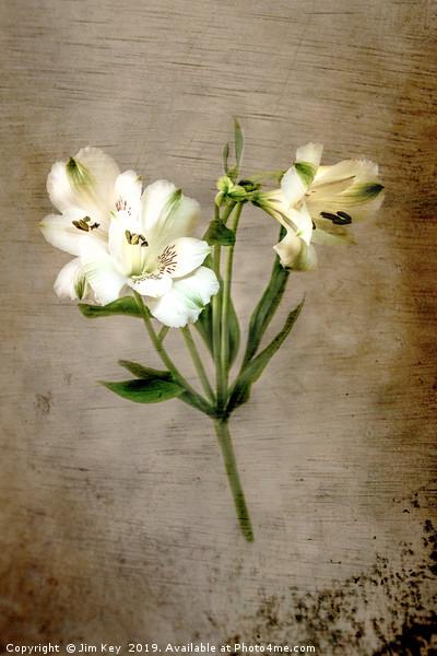 White Lily Canvas print by Jim Key