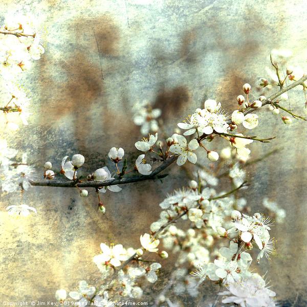 White Hawthorn on Blue Canvas print by Jim Key