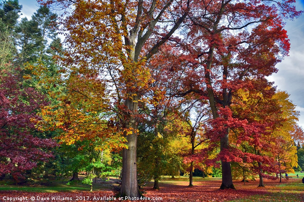 Autumnal colours in Virginia Water Lake      Canvas print by Dave Williams