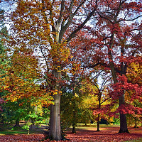 Buy canvas prints of Autumnal colours in Virginia Water Lake      by Dave Williams