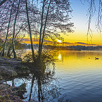 Buy canvas prints of Mist on the lake, Sunrise at Horseshoe Lake by Dave Williams
