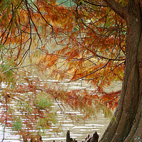 Buy canvas prints of Autumn Colours by Dave Williams