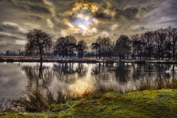 Sunrise at Bushy Park Framed Mounted Print by Dave Williams