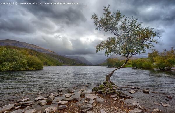 The Lone Tree, Llyn Padarn, LLanberis Canvas Print by Derek Daniel