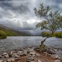 Buy canvas prints of The Lone Tree, Llyn Padarn, LLanberis by Derek Daniel
