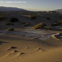 Buy canvas prints of Mesquite Sand Dunes, Stovepipe Wells, Death Valley by Derek Daniel