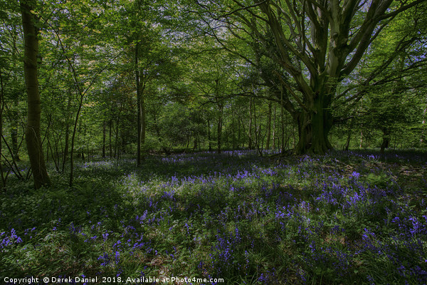 Bluebell Wood Canvas print by Derek Daniel
