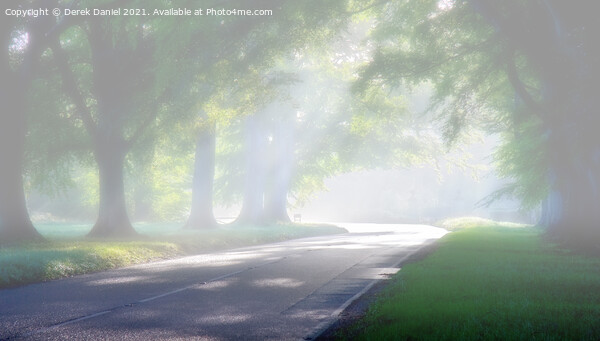 Misty Morning At Beech Avenue #2 Canvas Print by Derek Daniel