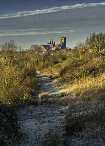 Ely Cathedral from Roswell Lakes, Cambridgeshrie Framed Mounted Print by Andrew Sharpe