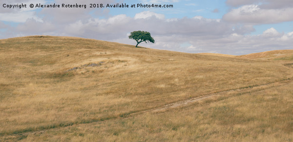 Oak tree on Alentejo Landscape, Portugal Canvas print by Alexandre Rotenberg