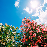 Buy canvas prints of Colourful flowers in the spring by Alexandre Rotenberg
