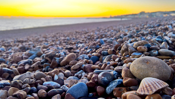 Seashell amongst the pebbles Canvas Print by Richard May