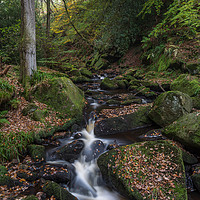 Buy canvas prints of Padley Gorge by Aidan Mincher