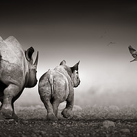 Buy canvas prints of Black Rhinoceros cow with calf  by Johan Swanepoel