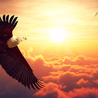 Buy canvas prints of African Fish Eagle flying above clouds by Johan Swanepoel
