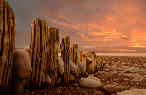 Weathered Groynes Canvas Print by David Neighbour