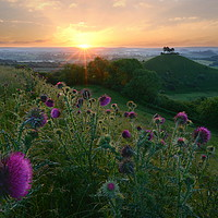 Buy canvas prints of Thistles of Quarry Hill by David Neighbour