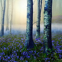 Buy canvas prints of Low Mist in a Bluebell Wood by David Neighbour