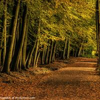 Buy canvas prints of Newmillerdam Woodland Walk Wakefield by Tim Hill