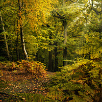 Buy canvas prints of Newmillerdam Autumn Woodland Leaves by Tim Hill