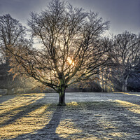 Buy canvas prints of Sunrise behind Tree in Winter by Tim Hill