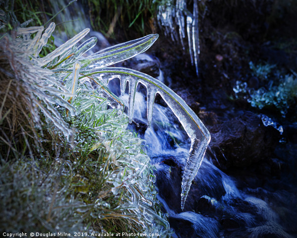 Blade of Grass in Ice Canvas print by Douglas Milne