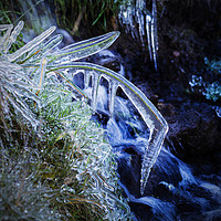 Buy canvas prints of Blade of Grass in Ice by Douglas Milne